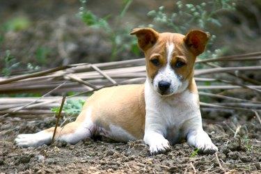 Close-up of a pup