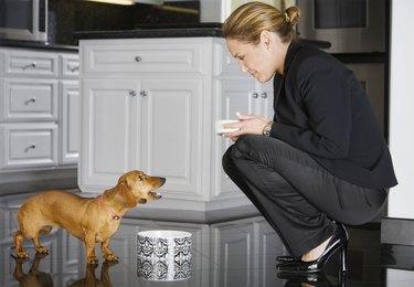 Hispanic businesswoman feeding dog