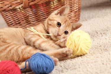 Kitty and wool balls