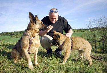 man playing with his dogs