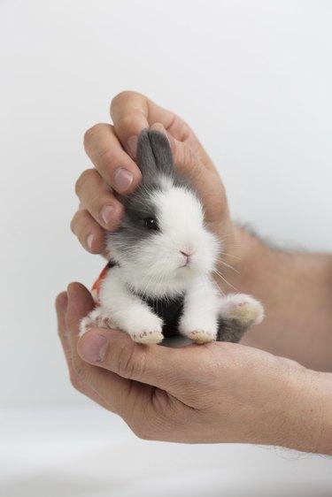 Cute little bunny.