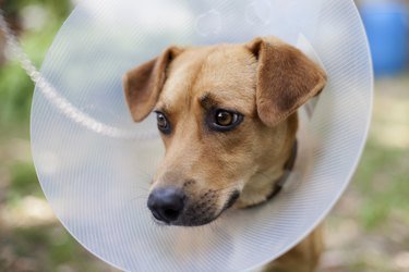 animal suffering in cone