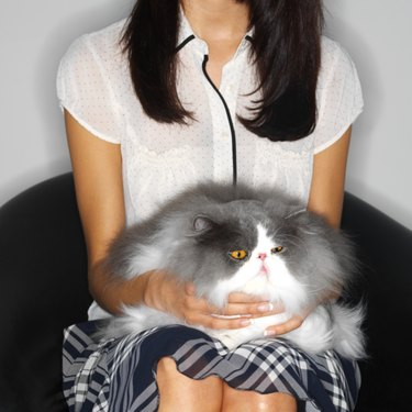 mid section view of a woman sitting with a cat in her lap