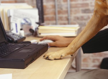 Man working with laptop, dog's paw on desk, Close-up of hand and paw
