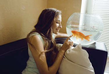 pretty woman playing with goldfish at home, sunlight morning