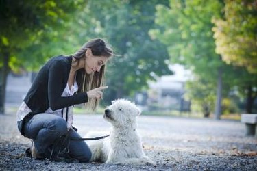 A woman training a white dog to sit and stay outside