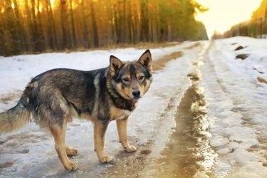 Dog walking on the snowy road in winter