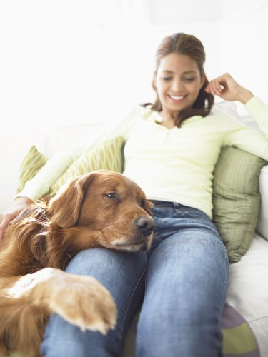 Woman Sits on a Sofa, Dog Resting His Head and Paw on Her Leg