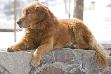 dog resting in street