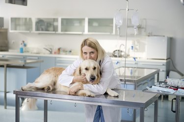 Young female veterinary caring of a cute beautiful dog.