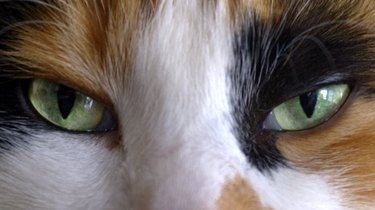 Close-up of cat's eyes