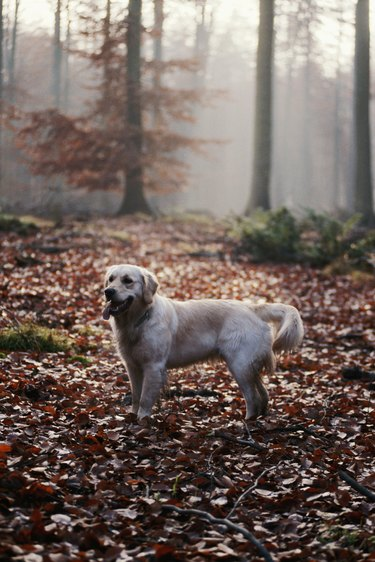 Dog standing in forest