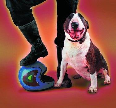 Bull terrier next to man wearing biker boots