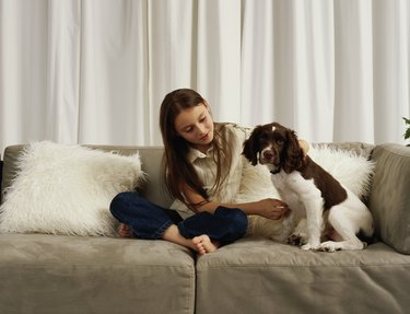 Girl (7-9) on sofa with springer spaniel puppy