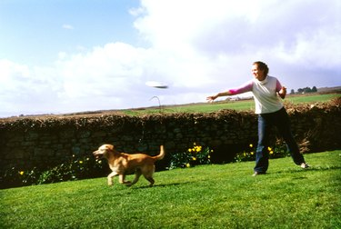 Young woman throwing a plastic disc and her dog running to catch it