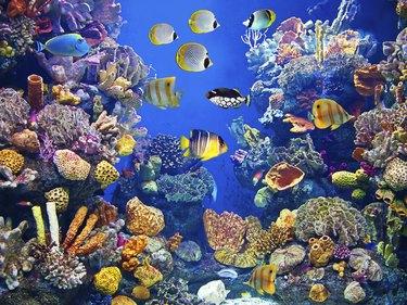 Colorful aquarium with fishes