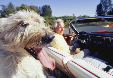 Irish wolfhound with owner driving in convertible, focus on dog