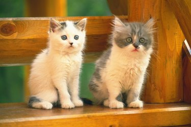 Two Kittens Sitting on a Wooden Stool, Looking Sideways, Side View, Differential Focus