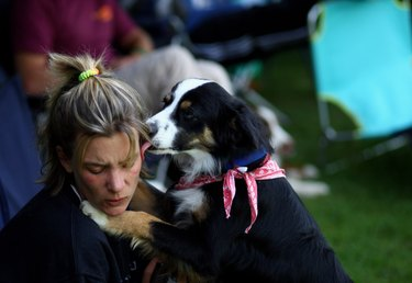 Dog Frisbee - German Championship