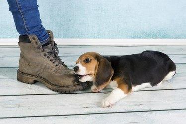 Big foot small puppy