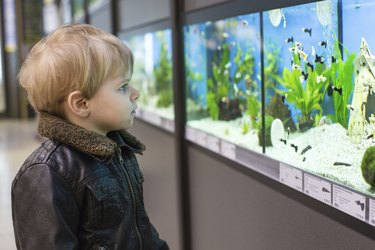 Little boy watches fishes in aquarium