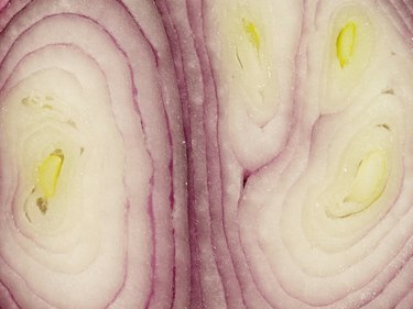 Close-up of a sliced onion