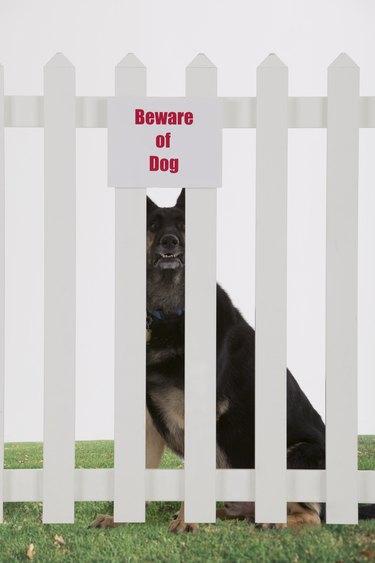 Beware of dog sign and dog