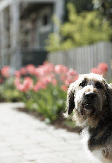 Dog outdoors, looking away