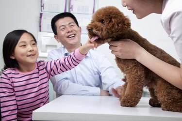 Woman and girl with pet dog in veterinarian's office