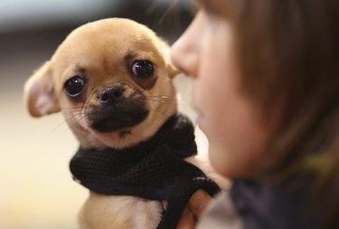 Animal Lovers Converge On Pet Fair