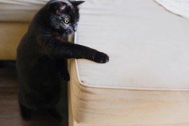 A cat scratching a mattress