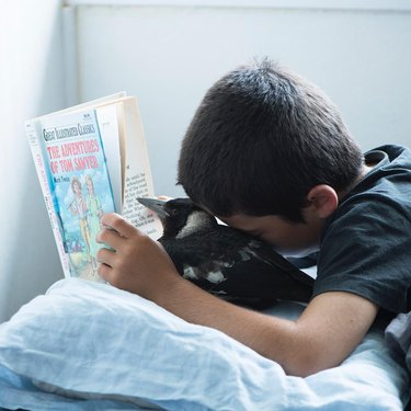 Boy and magpie reading a book in bed.