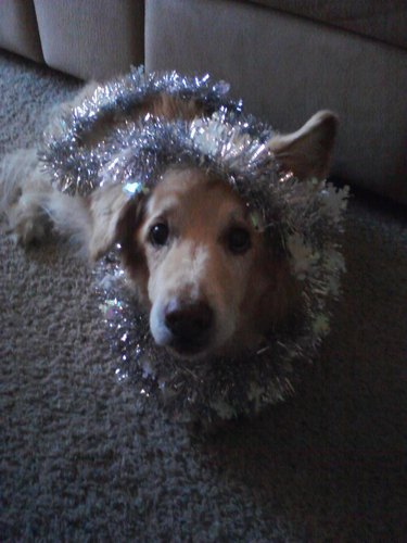 Animals Who Deeply Understand Your Holiday Struggles
