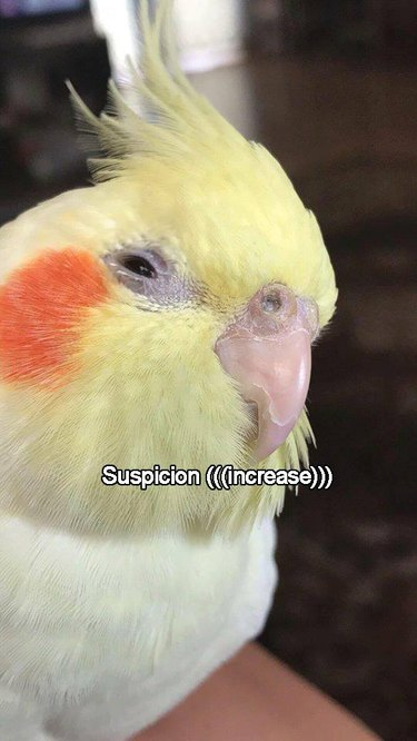 Bird squinting eyes, looking suspicious