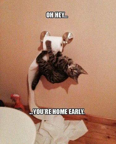 Cat hanging upside down on toilet paper.