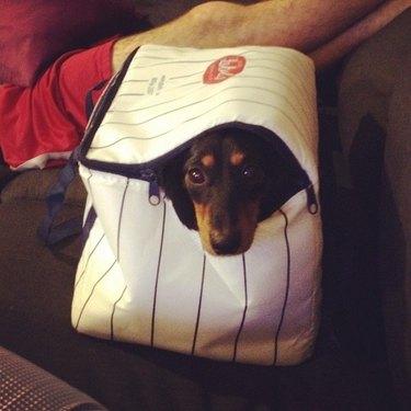 Dog in cooler.
