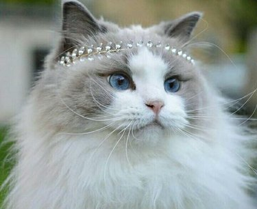 The 20 Top Names For Female Cats