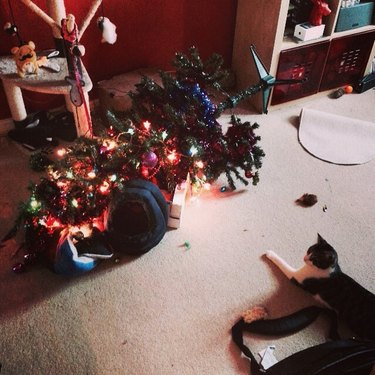 Cats Destroying Christmas Trees Because Cats