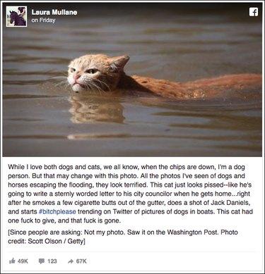 Badass cat swims through Hurricane Harvey floodwaters