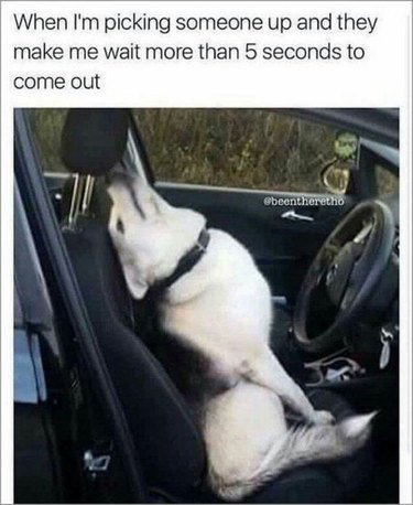 Dog looking annoyed in car.