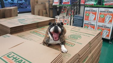 Dogs Who Are Happier to Be Alive Than Any Human Ever