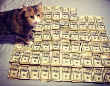 Cat standing on a lot of cash.