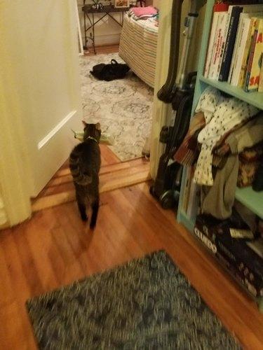 cat on way to hide treasure