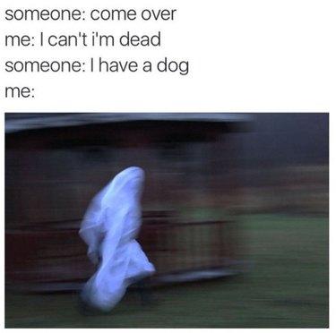 Blurry ghost runs to meet dog.