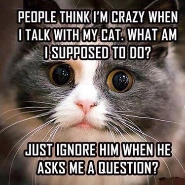 People think I'm crazy when I talk with my cat.