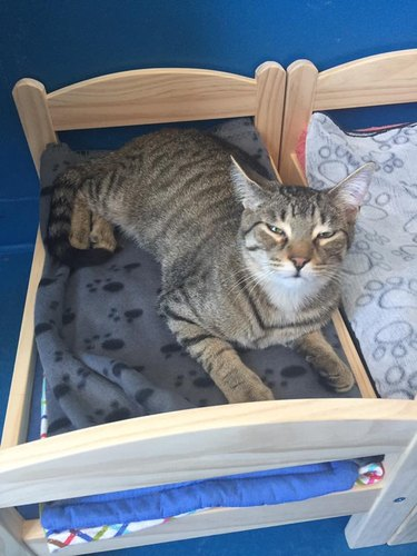 Cat sleeps in doll bed donated to shelter by Ikea
