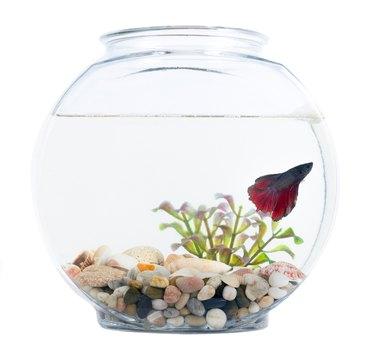 fish in goldfish bowl