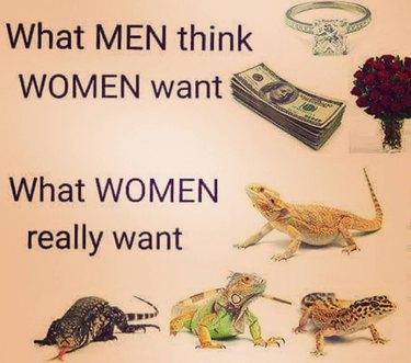 Collage of fancy stuff vs. reptiles.