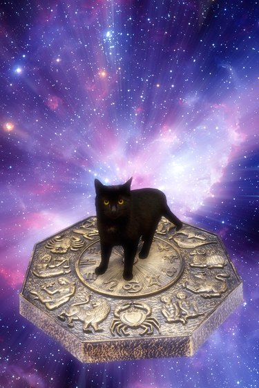 What Kind Of Cat Are You Based On Your Zodiac