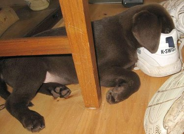 18 Dogs Sleeping Like Weirdos